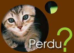 Chats perdus